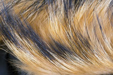 Texture of the fur raccoon with a long nap. Macro shot.
