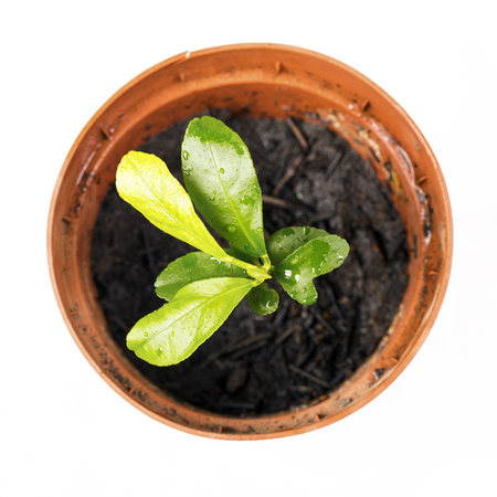 A green sprout in a pot. The leaves have a drop of water