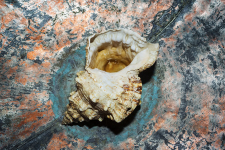 Sea shell on color nacreous background