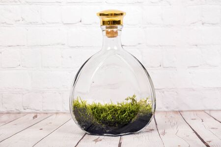 Bottle terrarium with Miniature plants and moss. Stok Fotoğraf