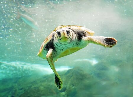 Green Turtle in sea.Plastic pollution in ocean environmental problem.