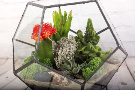 Glass florarium vase with succulent plants  on wooden table. Small garden with miniature cactuse. Home indoor plants.