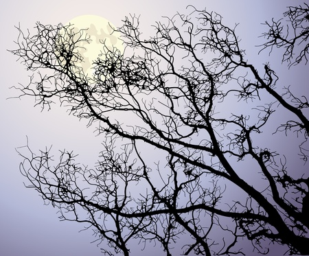 The moon behind tree branches  Vector