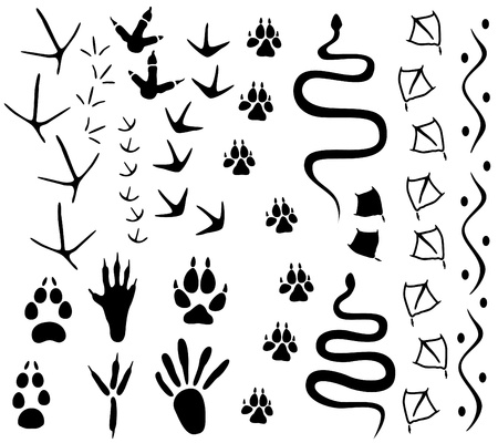Animal paw tracks