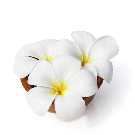 flores en esquina: Flores tropicales Plumeria frangipani aislado en blanco