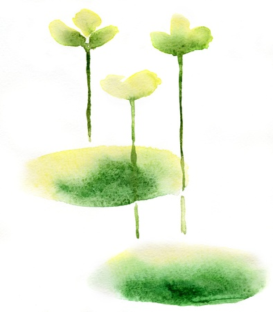 Floral watercolor paintings with water lily Stock Photo