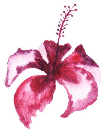 spontaneous painting: Watercolor painting of mulberry flower.