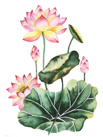 Watercolor painting of Lotus flowers. Oriental style.
