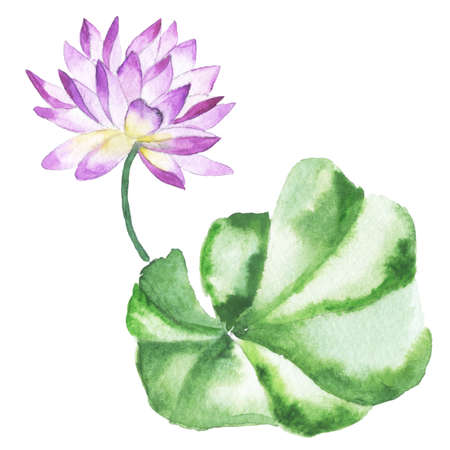 Watercolor painting of Water lily. Oriental style. photo