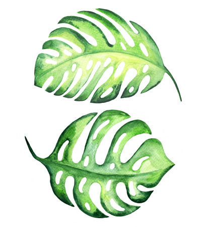 Tropical exotic leaves, monstera. Watercolor illustration. Banco de Imagens