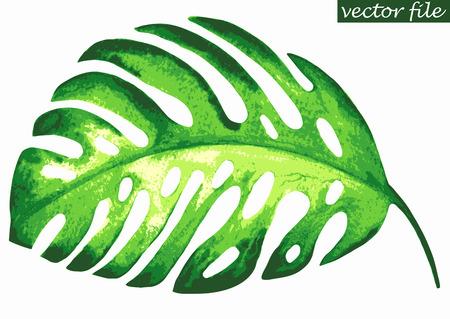 Tropical exotic leaf monstera. Vector illustration.
