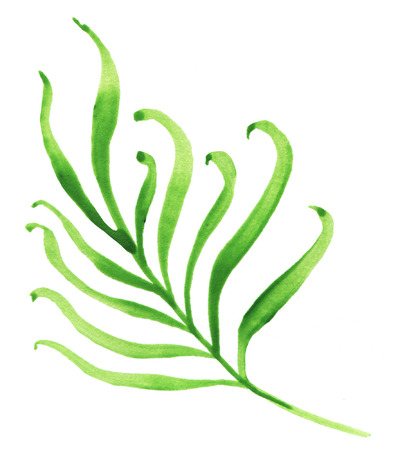 Green tropical branch. Watercolor vector illustration.
