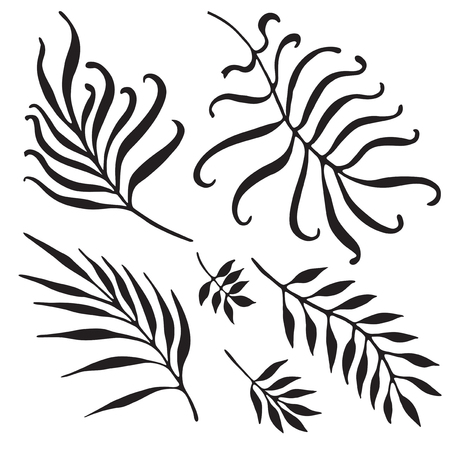 leaf illustration: Palm Tree Branches Silhouette. Tropical Leaves and Twigs isolated on white background.