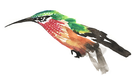 Stylish watercolor painting of green and red humming bird isolated on white background Banco de Imagens