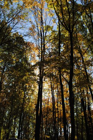 Autumn forest illuminated by tired sun