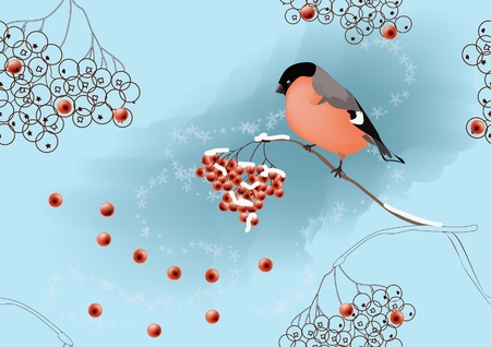 ashberry: Seamless winter landscape with bullfinch sitting on ashberry branch.