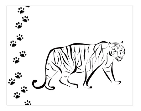 black and white tiger illustration with footsteps