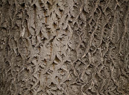 bark texture: Gray bark texture Stock Photo