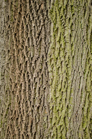 bark background: Bark background.