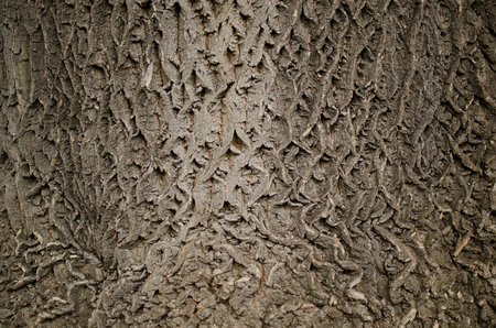 bark background: Gray bark background Stock Photo