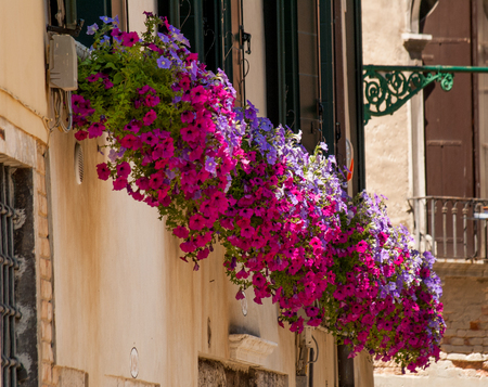 flower boxes: Colourful multicoloured flowers in window box in Venice, Italy Stock Photo