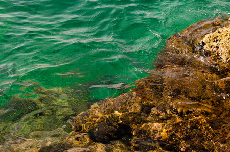 seawater: Rocky seabed with emerald seawater. Polignano a Mare, Italy.