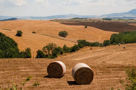 Haycocks on the field in Tuscany, Italy Stock Photo
