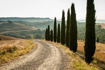 The road in Tuscany with cypress, Italy Stock Photo