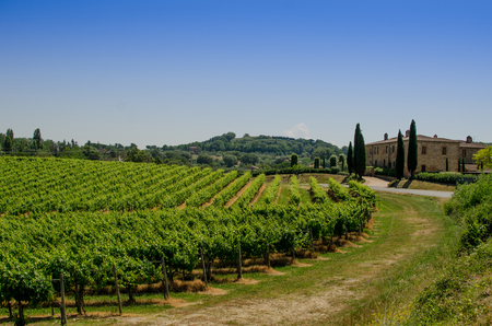 The vinery and farm of Tuscany