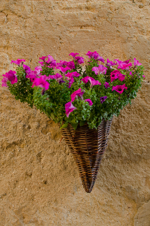 Flowers in the wicker hanging on the wall, Pienza, Italy. Stock Photo