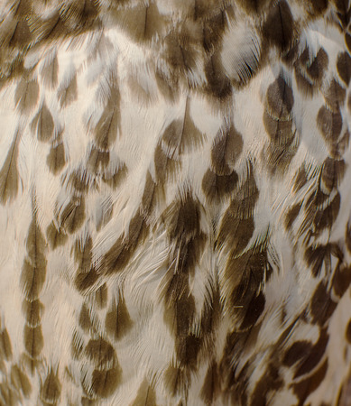 Texture of white and brown feathers