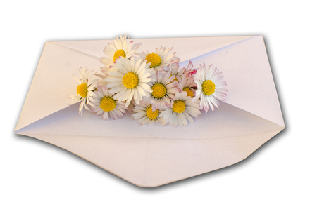 Envelope with camomiles on the white background