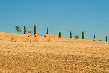 Cypresses road in tuscanian hills. Italy Stock Photo