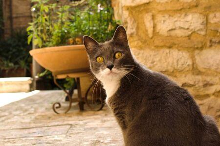 Surprised cat on medieval street of Spello, Umbria, Italy