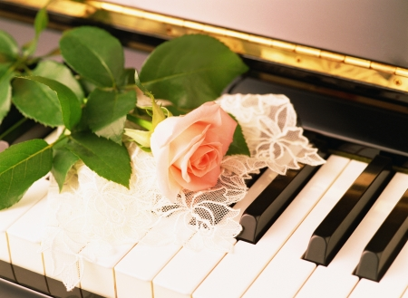 piano and rose photo