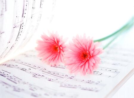 music score: music score and gerbera