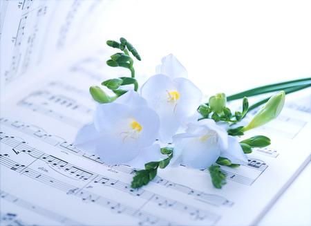 music score: music score and flower Stock Photo