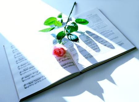 music score: music score  and single flower