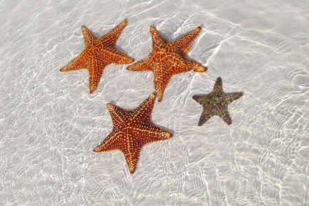 sea stars: Sea star at the sand bottom of the fine sea, Crarib sea, Cuba, Cayo-Largo Stock Photo