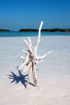 snag: Snag on sand island on Caribbean sea  Stock Photo