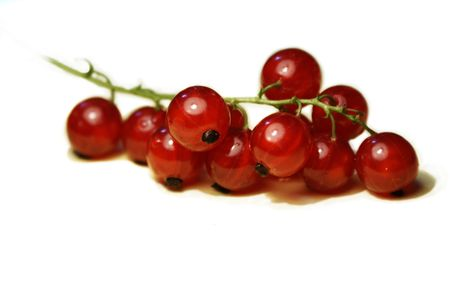 Fresh red currant isolated on white background photo