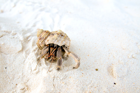 hermit crab: Hermit crab on the beach close up Stock Photo