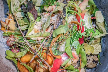 Pile of food scraps from kitchen for composting