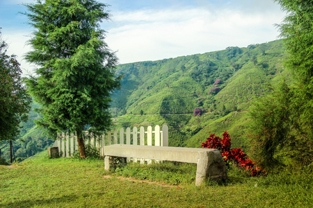Cement chesterfield at view point on the mountain, Tea plantation background