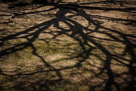 Dark background of branch shadow on the ground