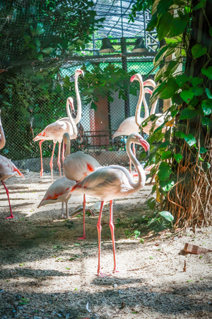 White flamingos group in the zoo with sun light Stock Photo
