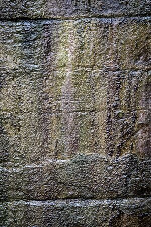 Background and texture of moss on the wall Stockfoto