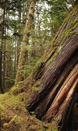 Tree trunk in the woods Banco de Imagens