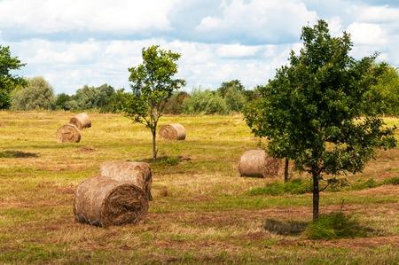 hayroll: Straw bales, haystack on agricultural farmland.