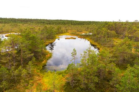 Viru bog (Viru raba) in the Lahemaa National Park in Estonia. Viru bog study trail Stock fotó